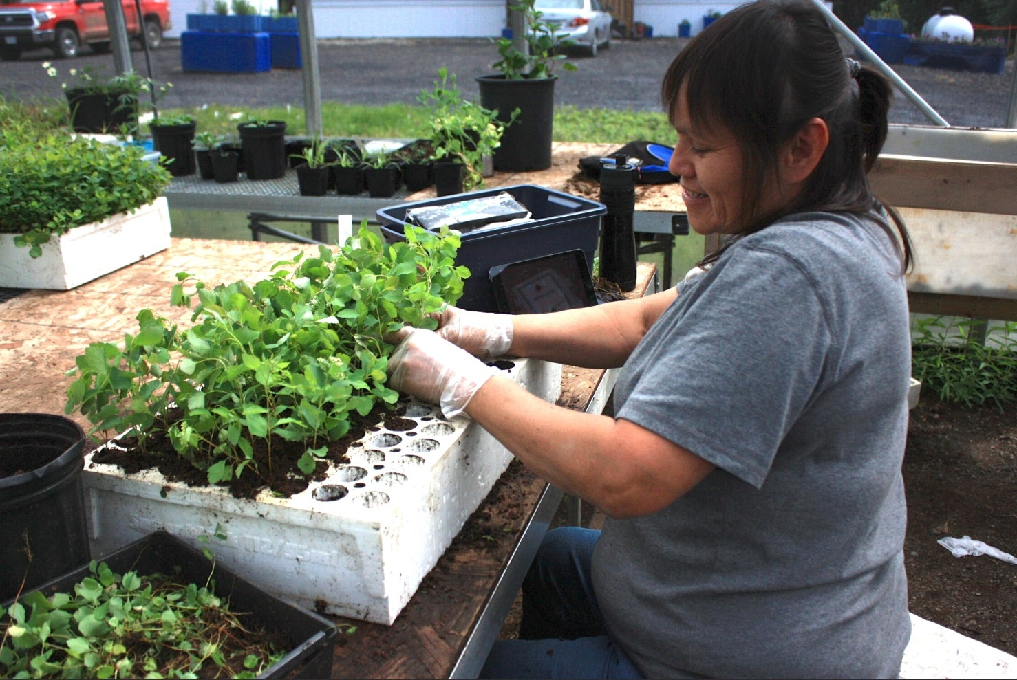 Delain Gauthier works on thinning out starter trays, choosing only the strongest of the new growth. - Mike Carter